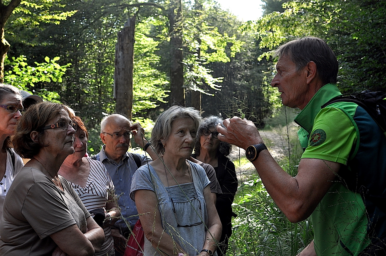 bain de foret dans les Vosges